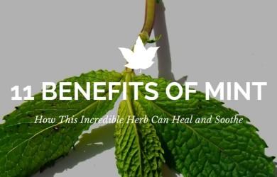benefits-of-mint